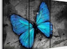 Kép - The study of butterfly - triptych