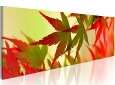 Kép - Touch of autumn