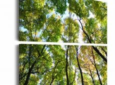 Kép - Treetops