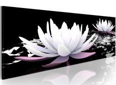 Kép - White water lilies