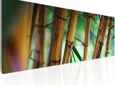 Kép - Wild bamboos