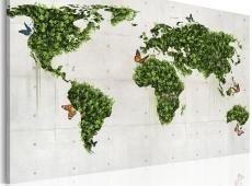Kép - Zöld föld a pillangók