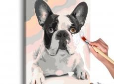 Kifestő - French Bulldog