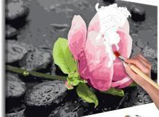 Kifestő - Pink Flower and Stones